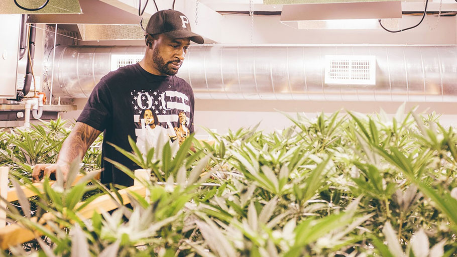 A billion-dollar industry, a racist legacy: being black and growing pot in America