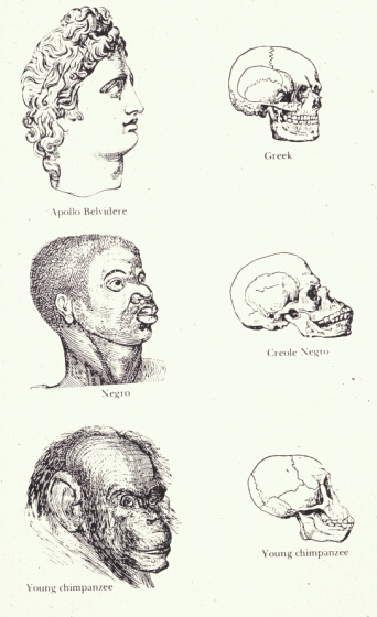 "Illustration from Indigenous Races of the Earth (1857), whose authors, Josiah Clark Nott and George Robbins Gliddon, implied that ""negroes"" were inferior to white Europeans."