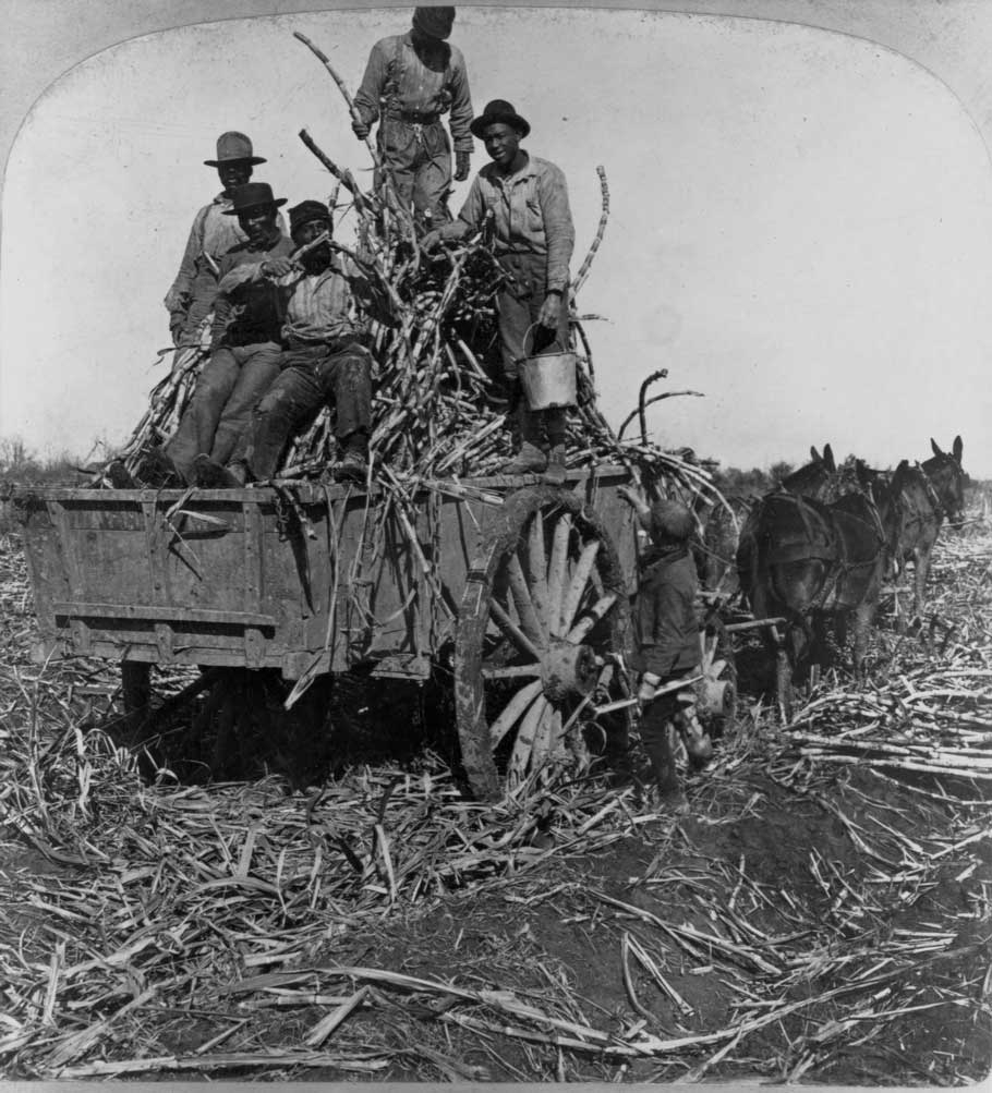 Workers on a cart filled with sugar cane on a plantation in Louisiana.