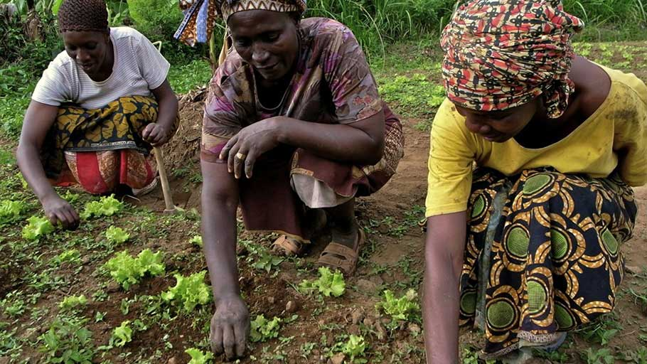 Josephine Kaya, a woman from a rural farming community, works with others at the field.