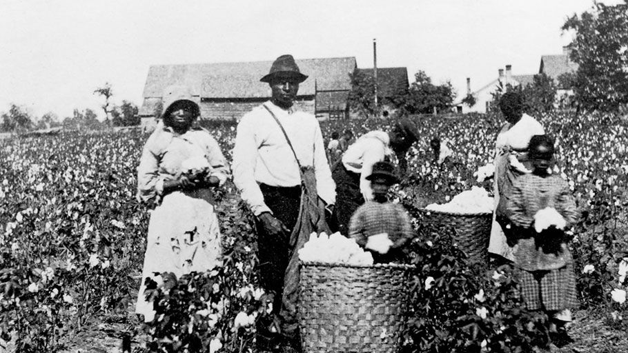 Slavery Cotton Field