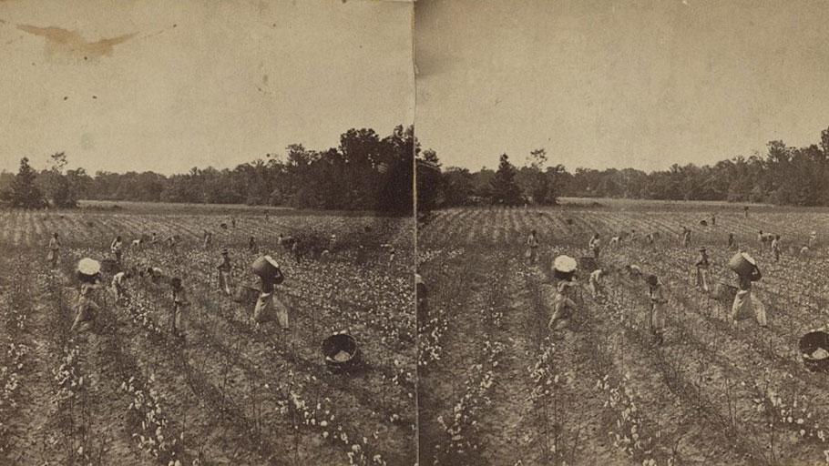 Cotton Picking Alabama